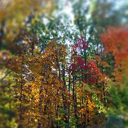 Bringing Nature Into Focus Ad Series